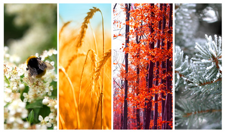 Photo for Four seasons: Spring, summer, autumn and winter - Royalty Free Image