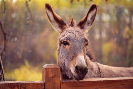 Photo pour funny brown donkey domesticated member of the horse family - image libre de droit