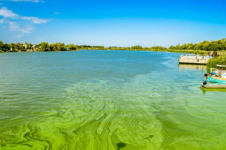 Photo pour Green river waters with Algal bloom - image libre de droit