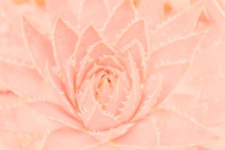 Foto de Pink tropical leaves background picture - Imagen libre de derechos