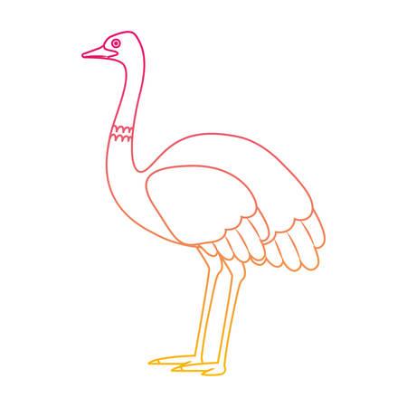 A wild ostrich Australian bird vector illustration design