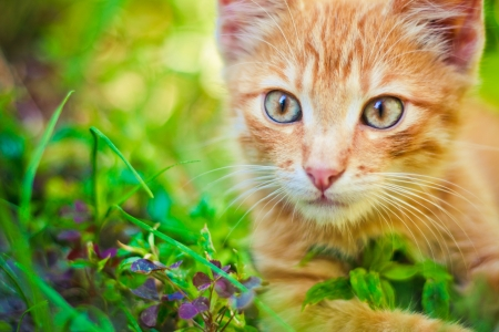 Photo for Young kitten in grass outdoor shot at sunny day - Royalty Free Image