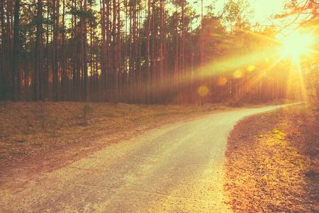 Foto de Lane running through the autumn deciduous forest at dawn or sunrise. - Imagen libre de derechos