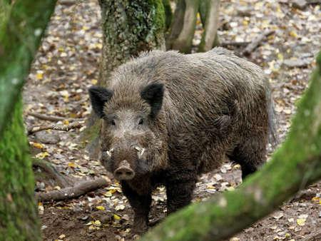 Photo pour wild animal in the forest - image libre de droit