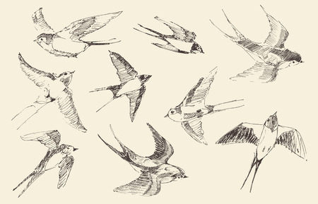 Ilustración de Swallows flying bird set vintage illustration, engraved retro style, hand drawn, sketch - Imagen libre de derechos