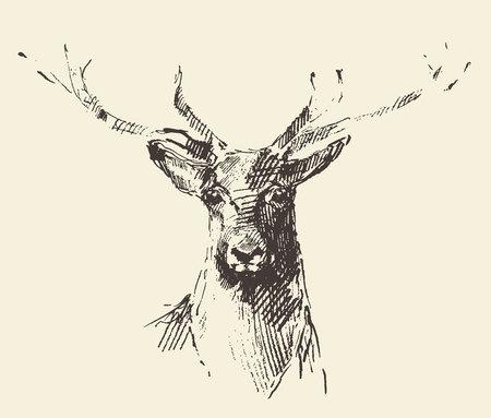 Ilustración de Deer engraving style vintage illustration hand drawn sketch - Imagen libre de derechos