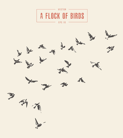 Illustration for A flock of birds, hand drawn vector illustration. - Royalty Free Image