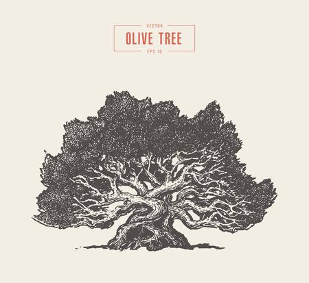 Illustration pour High detail olive tree, hand drawn, vector - image libre de droit