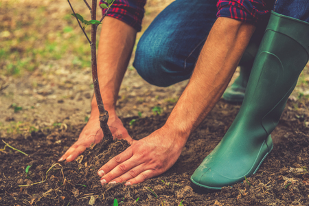 Photo pour Planting a tree. Close-up on young man planting the tree while working in the garden - image libre de droit