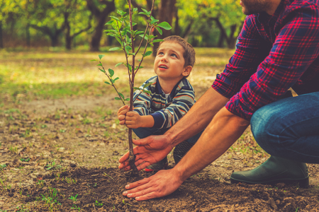Foto de When will it grow? Curious little boy helping his father to plant the tree while working together in the garden - Imagen libre de derechos