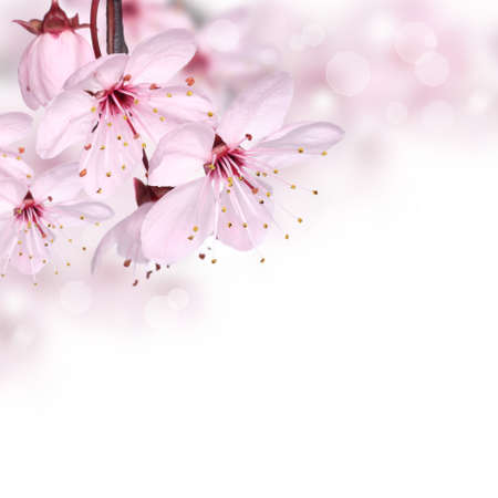Pink spring flowers design border background