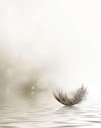 Foto de Condolence or sympathy design with a feather drifting on water - Imagen libre de derechos
