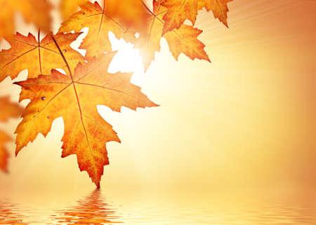 Photo pour Orange fall leaves border background - image libre de droit
