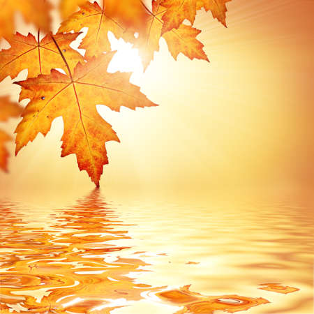 Foto de Orange fall leaves border background - Imagen libre de derechos