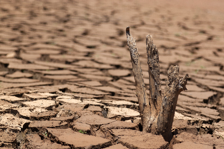 Foto de dead tree on the cracked ground of an empty dam during the dry - Imagen libre de derechos