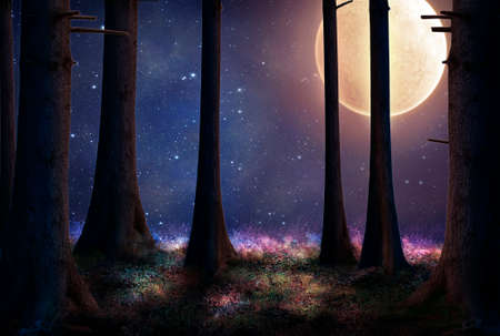 Photo for tall trees of a forest illuminated with a big full moon - Royalty Free Image