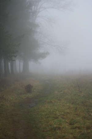 Photo pour Autumn fog over the wild river. Early morning. - image libre de droit