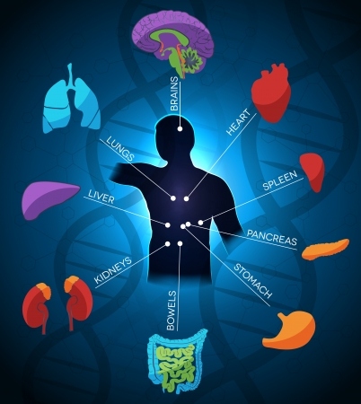 Illustration pour Human anatomy colorful and bright design, DNA chain at the background. Beautiful deep blue color. - image libre de droit