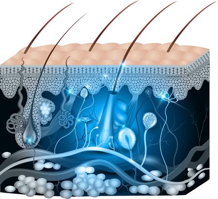 Illustrazione per Skin anatomy abstract blue design. Detailed medical illustration. - Immagini Royalty Free
