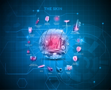 Illustration pour Skin anatomy structure background, detailed illustration - image libre de droit