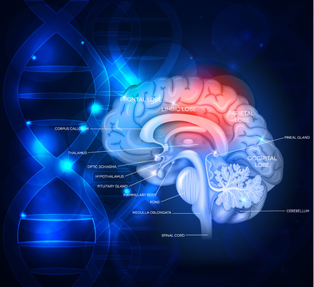 Illustration pour Human brain abstract scientific design with DNA chain, beautiful bright deep blue color - image libre de droit