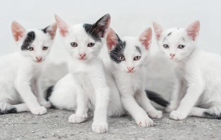 Cute cat family. Four little bandit
