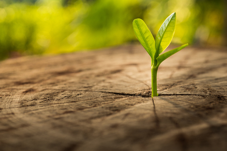 Foto de New Life concept with seedling growing sprout (tree).business development symbolic. - Imagen libre de derechos