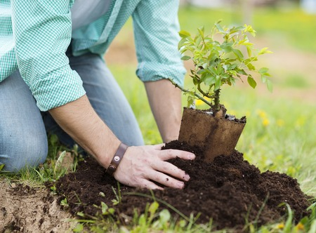 Foto de Close-up of young man s hands planting small tree in his backyard garden - Imagen libre de derechos