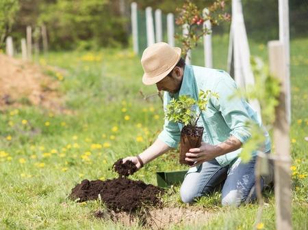 Foto de Young handsome man planting a small tree in his backyard garden - Imagen libre de derechos