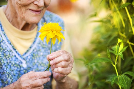 Photo pour Detail of senior woman in apron with yellow flower in the sunny garden - image libre de droit