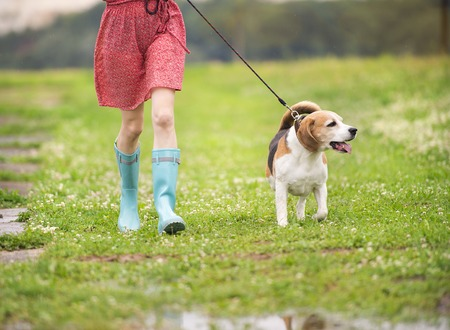 Photo for Unrecognizable young woman in dress and blue wellies walk her beagle dog in green nature - Royalty Free Image