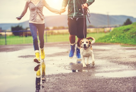 Photo pour Young couple walk dog in rain. Details of wellies splashing in puddles. - image libre de droit