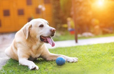 Foto de Dog playing outside in the garden with a little blue ball - Imagen libre de derechos