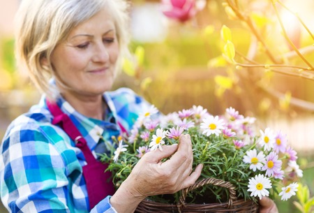 Photo pour Beautiful senior woman planting flowers in her garden - image libre de droit
