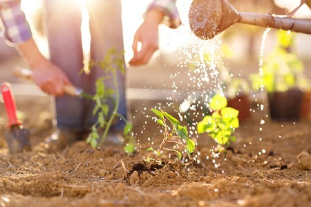 Foto de Senior couple watering seedlings in their garden - Imagen libre de derechos