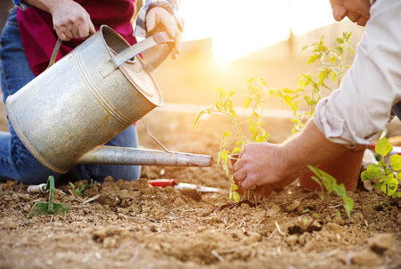 Foto de Beautiful seniors outside in their garden planting the vegetable - Imagen libre de derechos