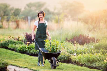 Foto de Gardener in green apron carrying seedlings in wheelbarrow, sunny summer nature, sunset - Imagen libre de derechos