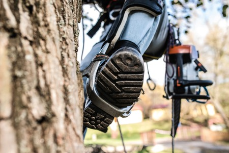 Photo pour Close up of leg of lumberjack with a chainsaw climbing a tree. - image libre de droit