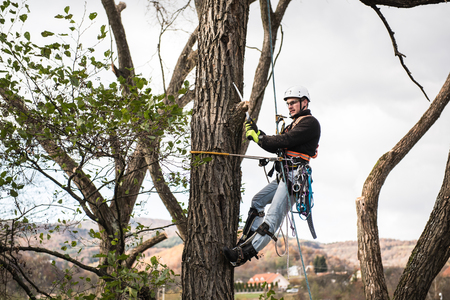 Photo pour Lumberjack with saw and harness pruning a tree. - image libre de droit
