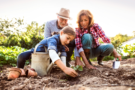 Foto de Senior couple with grandaughter gardening in the backyard garden - Imagen libre de derechos