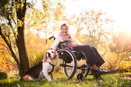 Photo pour An elderly woman in wheelchair with dog in autumn nature. - image libre de droit