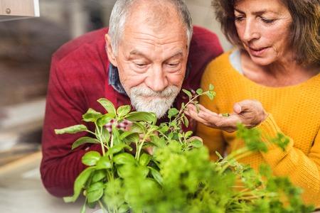 Photo pour Senior couple preparing food in the kitchen. - image libre de droit