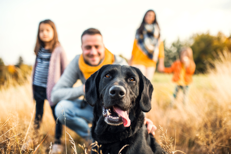 Photo pour A young family with two small children and a dog on a meadow in autumn nature. - image libre de droit