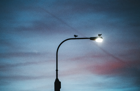 Photo for A street light against cloudy twilight background. - Royalty Free Image