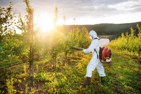 Photo pour A farmer outdoors in orchard at sunset, using pesticide chemicals. - image libre de droit