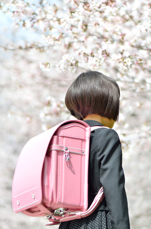 The first grade girl and cherry blossom (rear view)