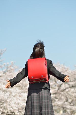 Japanese elementary school student (cherry blossom, rear view)