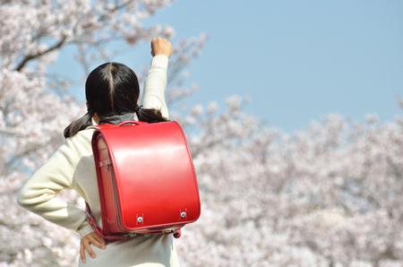 Japanese elementary school student (cherry, graduation, rear view)