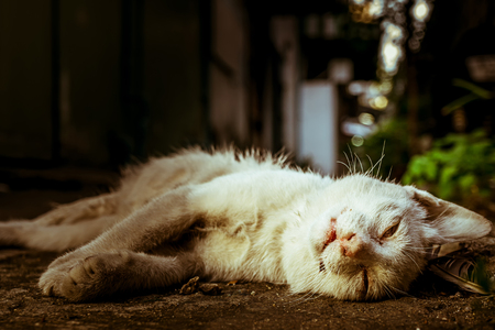 Photo for Corpse of white cat died on the ground, close up ,conceptual to death, alone, sadness, life, - Royalty Free Image