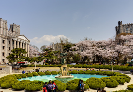SEOUL, KOREA-APRIL 18  Students are walking at the campus which is lined with cherry trees of full blossoms in Kyung Hee University on April 18, 2013 in Seoul, Korea
